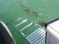24' Marathon boat rental swim ladder